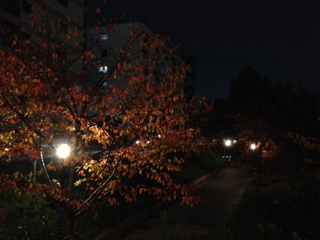 image-20121129055837.png